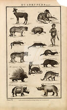 Quadrupeds Mammals Chimpanzee Panther etc - 1788 Folio Antique Print #A751