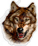 Gray Wolf Snarl Head Wild Life Animal Forest Car Bumper Vinyl Sticker Decal 4.6""