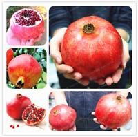 Giant Pomegranate Bonsai Fruit Tree Super Sweet Home Garden 20 Pcs Seeds NEW A P