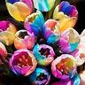 5Pcs rare rainbow tulip bulbs seeds beautiful flower seeds home garden plant