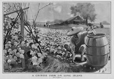 CHINESE FARM ON LONG ISLAND CHINAMAN CUTTING FLOWERS AGRICULTURE BARREL LABOR