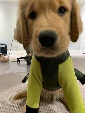 Gucci Dog Clothes Ebay