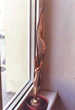 Typhonium venustum - Voodoo Lily - 10  Seeds