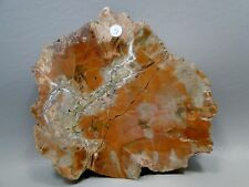 Petrified Conifer Wood Stone Slab Fossil Polished Rock Arizona #5