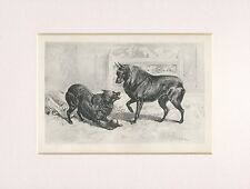 SCHIPPERKE DOGS RARE 1894 MOUNTED ANTIQUE DOG PRINT BY R. H. MOORE