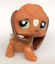 LPS Littlest Pet Shop Brown & White Beagle Puppy Dog Green Eyes Toy CN