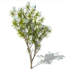 HUILE ESSENTIELLE TEA TREE 10 ml, Vrai qualité HECT garantie de qualité