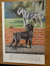 1958 Standard And Giant Schnauzer Dog Bookplate Art Print by Edwin Megargee ng76