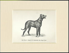 GREAT DANE BOARHOUND NAMED DOG 1890's ANTIQUE DOG PRINT MOUNTED READY TO FRAME
