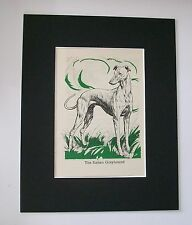 Italian Greyhound Dog Print Diana Thorne Bookplate 1940 Matted Waiting In Field