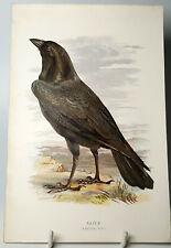 More details for raven bird antique chromolithography plate original 19th century.