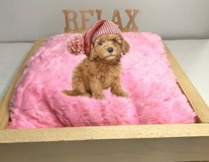 """Teacup Small Dog Bed 2"""" Thick Pink Pillow Made Of Wood All Natural No Nails"""