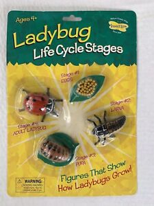Ladybug Life Cycle Stages Models Figures Insect Lore Education