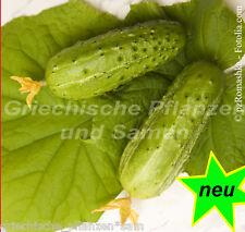 🔥 🥒 NATIONAL PICKLING Einlege-Gurke * 10 Samen für Freiland Gurken
