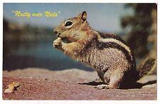 Ground Squirrel Stripes Nutty Over Nuts Postcard Vintage Not a Chipmunk!