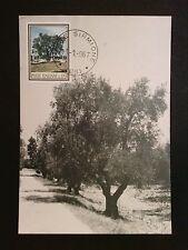 ITALIA MK 1967 FLORA OLIVEN OLIVE ÖLBAUM MAXIMUMKARTE CARTE MAXIMUM CARD MCc8207