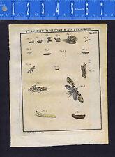 Corn Worm- Class IV Tab. XII Papilionum Nocturnorum  -Rosel 1746 Engraved Print