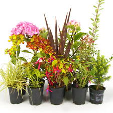10 X Mixed Garden Plants - High Quality Established Plants in Pots UK Grown