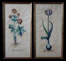 2 litho aquarellées botanique tulipa viridis coloris Ranunculus flore globoso