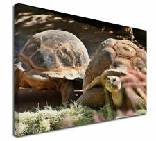 More details for giant tortoise x-large 30