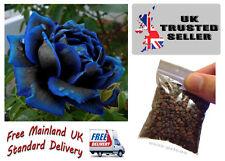 50 Mitternachtsblau Rose Blumensamen Gartenpflanze UK Verkäufer