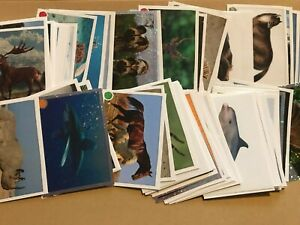 Animals 2020 Sticker Collection Panini CHOOSE YOUR STICKERS BUY 4 GET 10 FREE