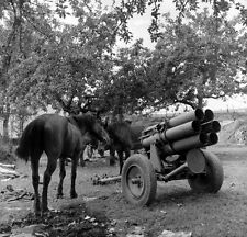 WW2 Photo WWII German Nebelwerfer and Horses Falaise Pocket World War Two / 2409