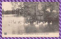 CPA 69 - LYON parc de la tête d'or un coin du lac et les cygnes