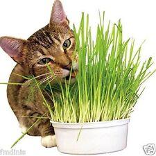 Orgánico Natural Gato Conejo WEAT Hierba agropiro 500g