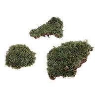 Modèle de mousse de lichen de bâtiment d'armure de sable de Sacca de 1/35