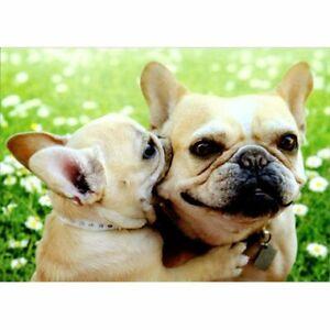 Avanti Press Dog Love Bite Cute Bulldog Mother's Day Card