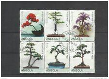 Bonsai Angola wunderschöner Zusammendruck Bonsai