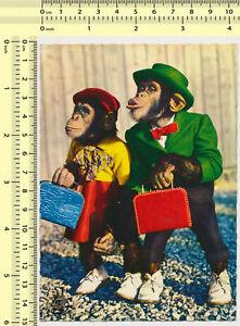 130 Chimpanzee Lady Gentleman Dressed as People vintage photo original postcard