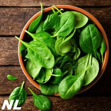 100Pcs Spinach Seeds Excellent Food Grade Vegetable Garden Nutritious Plant