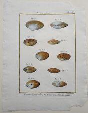 COQUILLAGES 18è (1791-1797), SEA SHELLS, HISTOIRE NATURELLE PANCKOUCKE