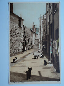 Vintage colour PC A Quaint Street, Looe. Cornwall. Unposted. Cats.