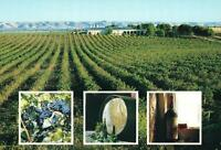 McLAREN VALE WINERIES SA POSTCARD - NEW & PERFECT
