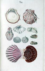 Seashells Poster 18th Century Nature Marine Reef Sea Shell Antique Repro Print 2
