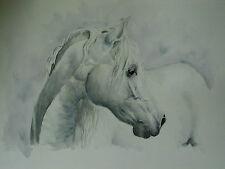 S. Hermann  / Ihr Pferd im Portrait