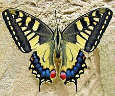 BUTTERFLY IN THE SAND  MOUSE PAD  IMAGE FABRIC TOP RUBBER BACKED