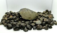METEORITE NWA 13113  L4 CHONDRITE OFFICIALLY CLASSIFIED & APPROVED OUTER SPACE