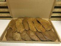 10+1 Seemandelbaumblätter 20-25cm natürlich gereift+getrocknet VERSANDKOSTENFREI