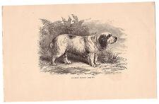 CLUMBER SPANIEL. CHIEN. GRAVURE OU TYPO ANCIENNE, SIGNEE 1883. REF 4228