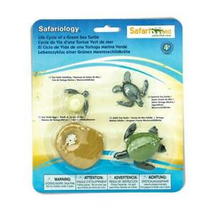 Plastic GREEN SEA TURTLE life cycle 4 stages educational learning resource toy