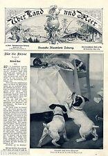 Gioventù non ha virtù Alfred weczerzick (giovani cani) antique print 1903