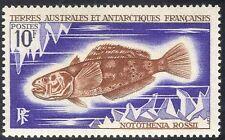 Fsat/TAAF 1971 nototenia jaspeada/pescado/Naturaleza/Marine/Vida Salvaje/Ambiente 1 V n23390