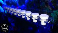 Coral frag rack for lps/sps ***with free plugs***