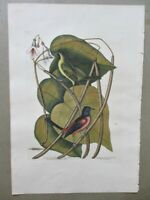 "Antique Engraving,BALTIMORE BIRD,Mark CATESBURY,C.1800,Handcolored,14"" x 20 3/4"""