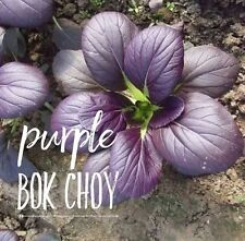 RARE✿ New! Purple Bok Choy/Choi Seeds 50+ ●Showy Color ●Easy to Grow