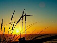 SUNSET GRASS BEACH SEA COAST PHOTO ART PRINT POSTER PICTURE BMP1361A